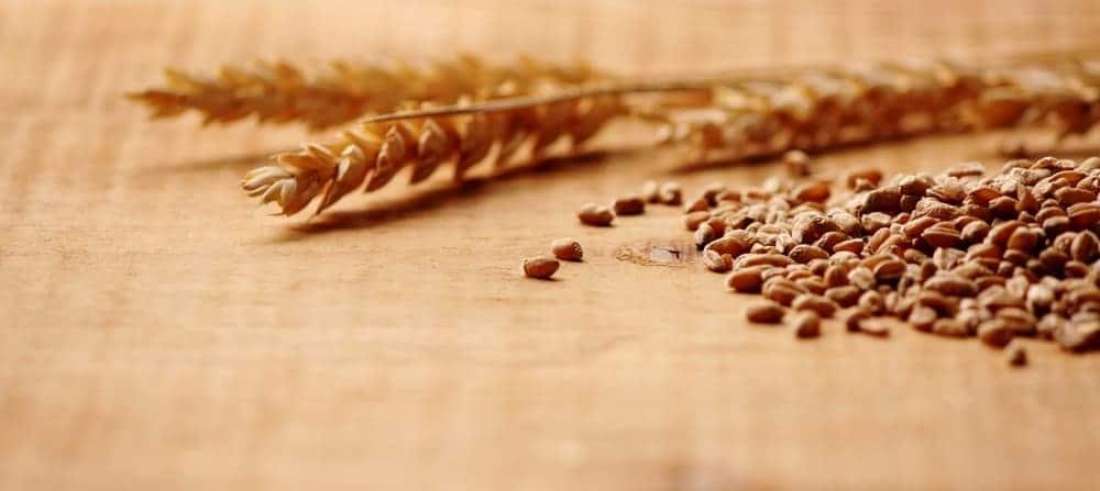 Wheat and Gut Leaks.jpg